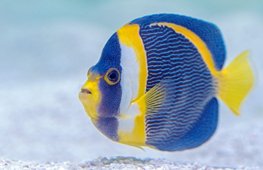 Want to swim faster than a fish?
